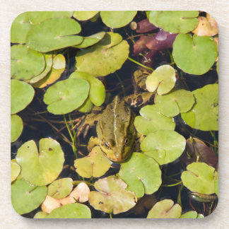 Green frog drink coaster
