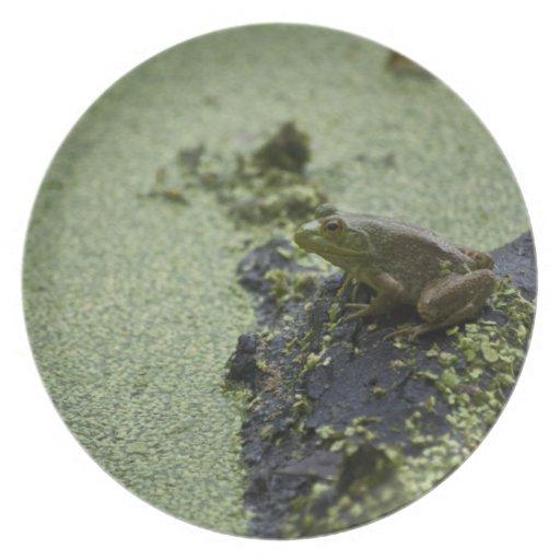 Green Frog Dinner Plates
