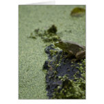 Green Frog Greeting Cards