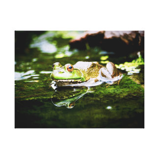 Green Frog in a Pond Canvas Print