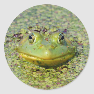 Green frog in duckweed, Canada Classic Round Sticker
