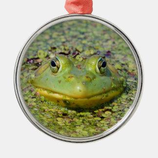 Green frog in duckweed, Canada Metal Ornament