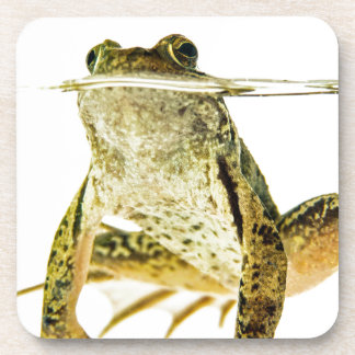 Green frog in water isolated on white beverage coaster