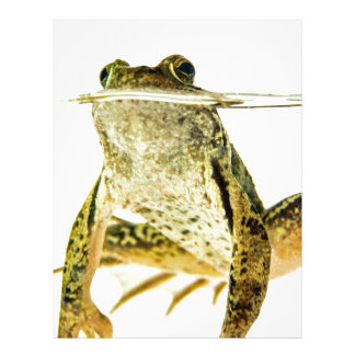 Green frog in water isolated on white letterhead