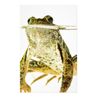 Green frog in water isolated on white stationery