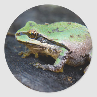 Green Frog on a Tree Stump Classic Round Sticker