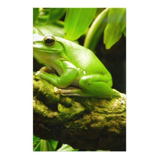 Green Frog Papelería