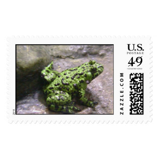 Green Frog Stamp