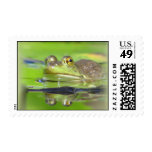 Green Frog Postage Stamp