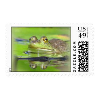 Green Frog Postage Stamp
