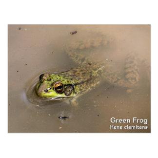 Green Frog Postcard