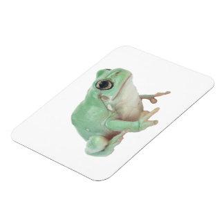 Green Frog Premium Magnet (2) sizes