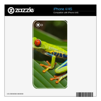 Green Frog Decals For iPhone 4