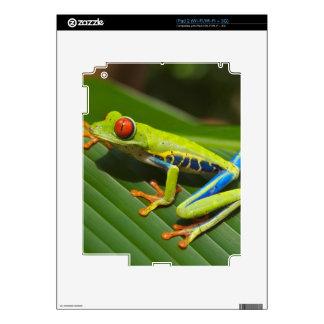 Green Frog iPad 2 Decals