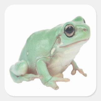 Green Frog Square Sticker