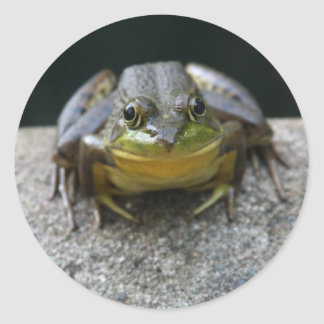 Green Frog Stickers