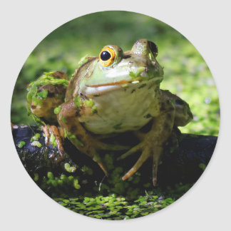 Green Frog Strikes a Pose on the Hose Classic Round Sticker