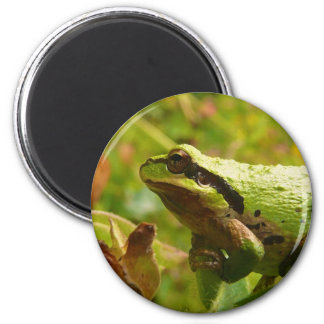 Green Frog Waiting for a Kiss from a Princess 2 Inch Round Magnet