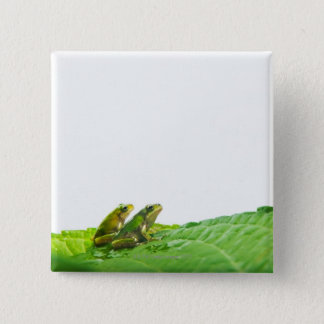 Green frogs on the leave pinback button