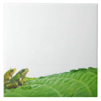 Green frogs on the leave ceramic tile