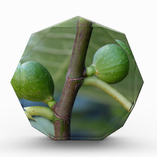Green fruits of a common fig  tree award