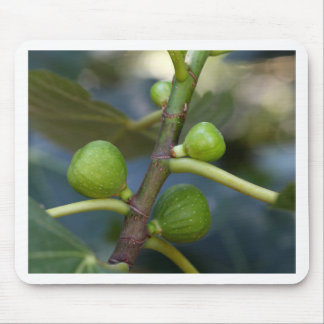 Green fruits of a common fig  tree mouse pad