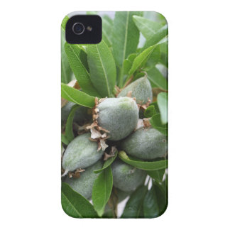 Green fruits of an almond tree Case-Mate iPhone 4 case