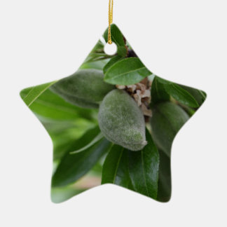 Green fruits of an almond tree ceramic ornament