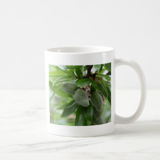 Green fruits of an almond tree coffee mug