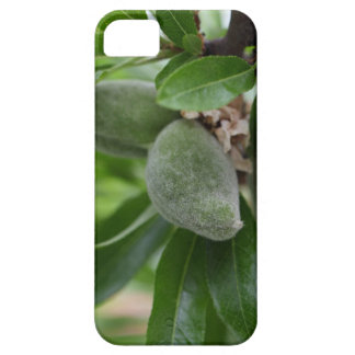 Green fruits of an almond tree iPhone SE/5/5s case