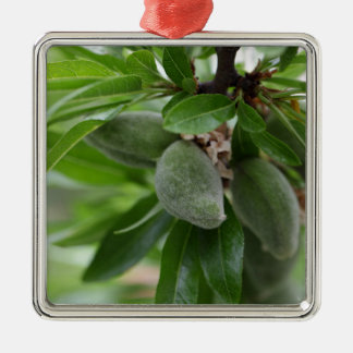 Green fruits of an almond tree metal ornament