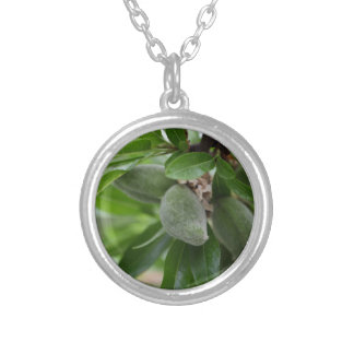 Green fruits of an almond tree silver plated necklace