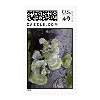 Green Fungus Postage