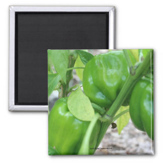 Green Garden Peppers Nature Photography Magnet