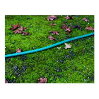Green Garden Snake Hose Postcard