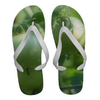 Green Garden Tomatoes On The Vine Flip Flops