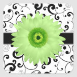 Green Gerbera Daisy with Black Scroll Design Seal Square Sticker