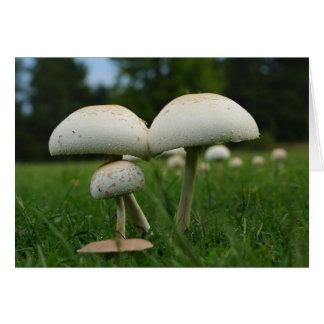 Green Gill Mushroom Card