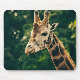 Green Giraffe Portrait, Animal Photography Mouse Pad