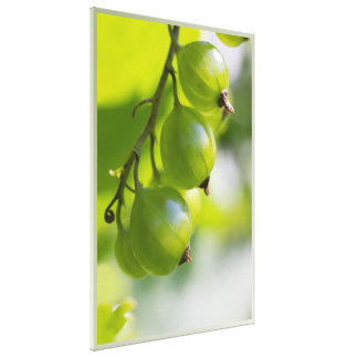 Green Gooseberries CC0307 Large Canvas Print