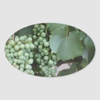 Green Grapes Growing Oval Sticker