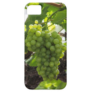 Green grapes iPhone SE/5/5s case