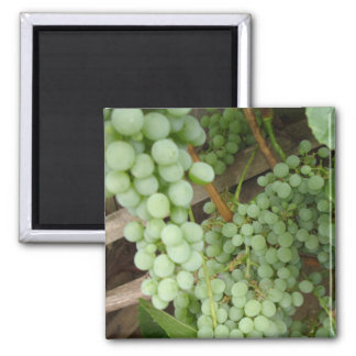 Green Grapes on the Vine - Magnet