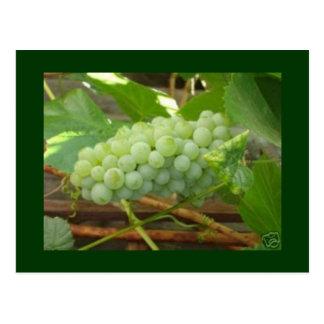 green grapes postcard