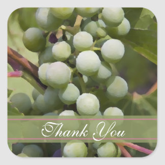 Green Grapes Vineyard Wedding Thank You Favor Tags Square Sticker