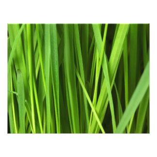 Green Grass background Flyer