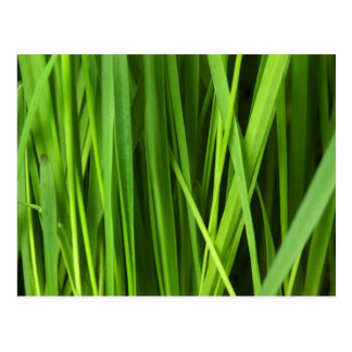 Green Grass background Postcard