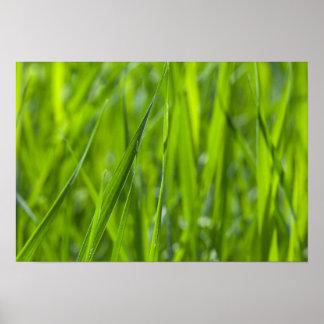 Green grass field poster