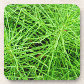 Green Grass Fireworks; No Text Beverage Coasters