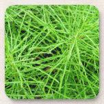 Green Grass Fireworks; No Text Drink Coaster